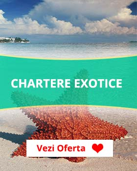Chartere Exotice